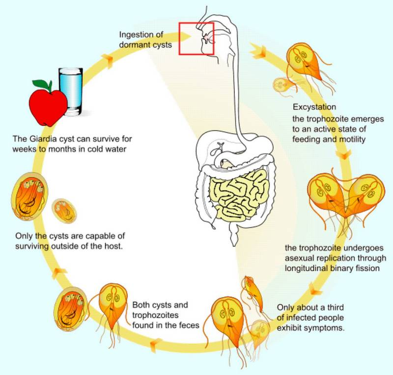 giardia infection in babies