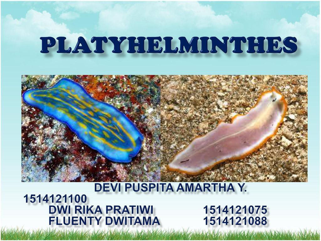 platyhelminthes cacing ppt)