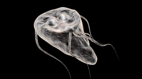 giardia no treatment)