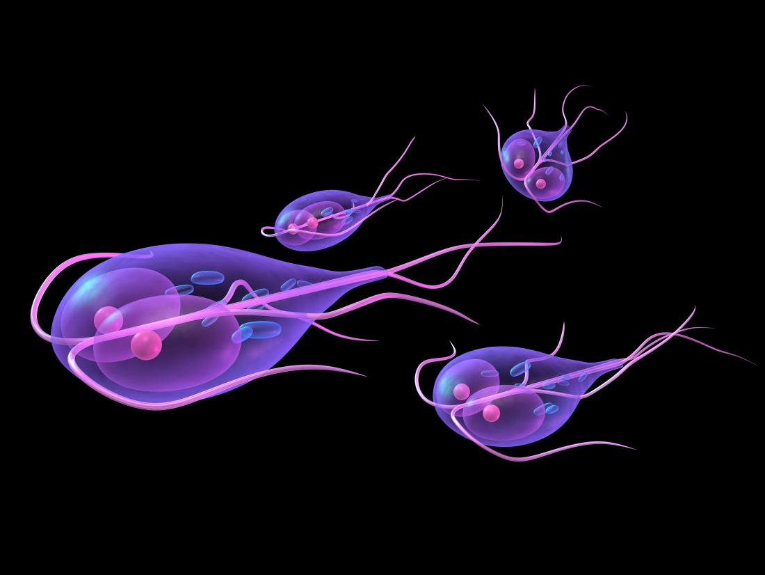 giardia infection in babies)