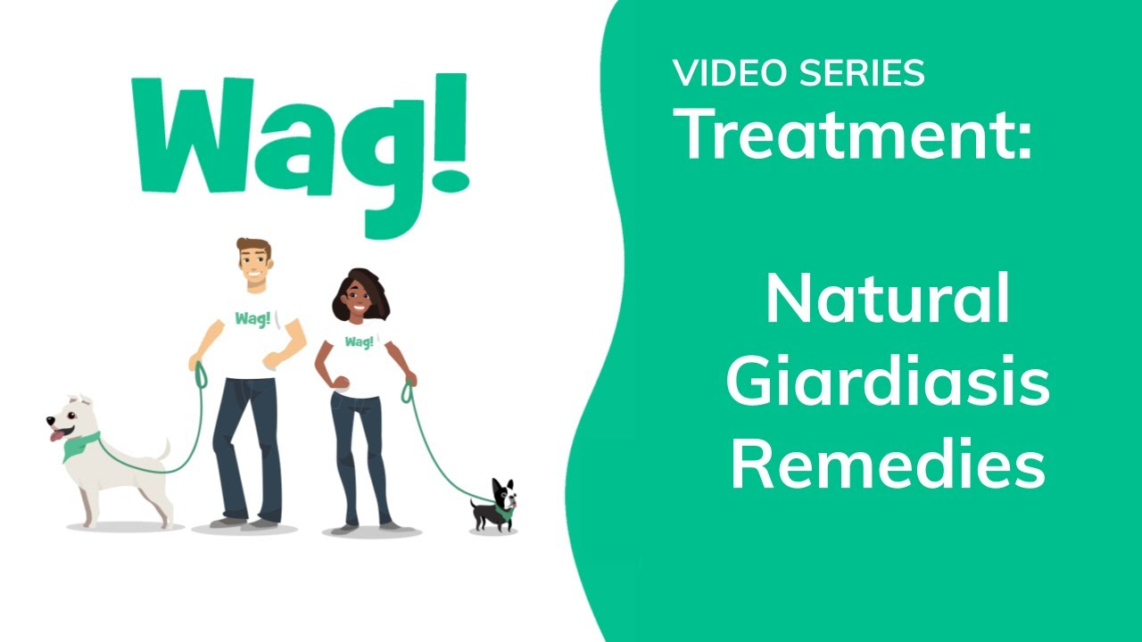 is giardia easy to get rid of)