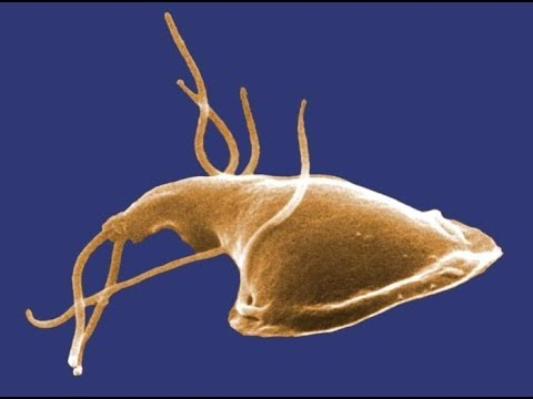 giardia in pond water