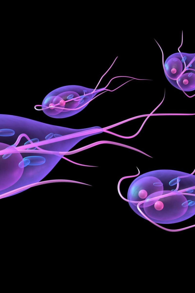 blood in stool after giardia