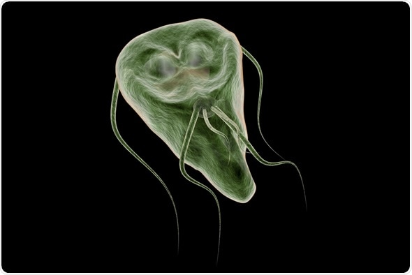 Giardia bacteria or virus